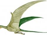 Rhamphorhynchus muensteri