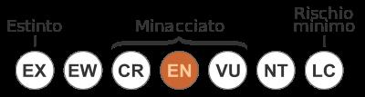 Status iucn3 Balaenoptera musculus